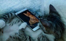 CAT mobiltelefon